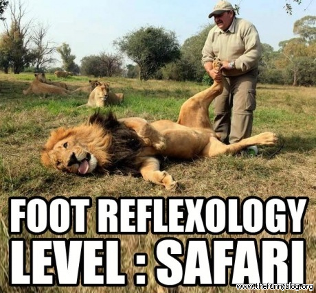 foot-reflexology-level-safari-funny-lion